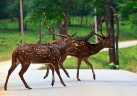 Golden Triangle Tour Jim Corbett