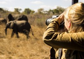 Photographic Safari India