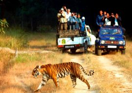 South India Wildlife Tour