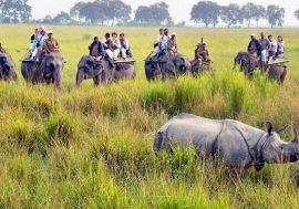 Wildlife Tours in Eastern India