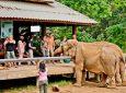 Grand India Wildlife Tour